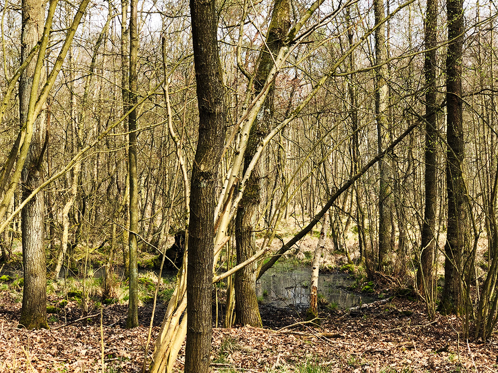 naturnaher Wald